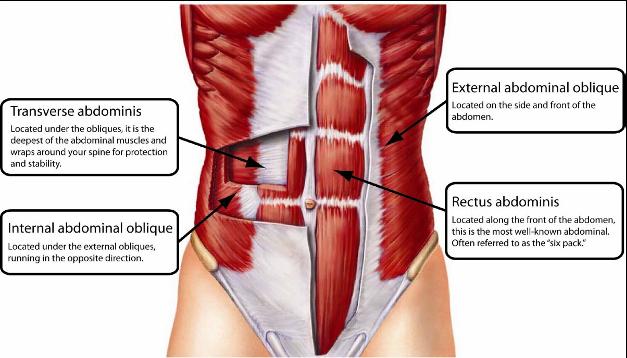 Kjernen består av de rette magemusklene (rectus abdominis), de ytre og skrå magemusklene (m. Internal oblique, m. External Oblique), et bredt belte som går under disse musklene og rundt hele kroppen (m. Transversus abdominis, også kalt «det indre korsettet»), ryggstrekkerne (m. Erector spinae).