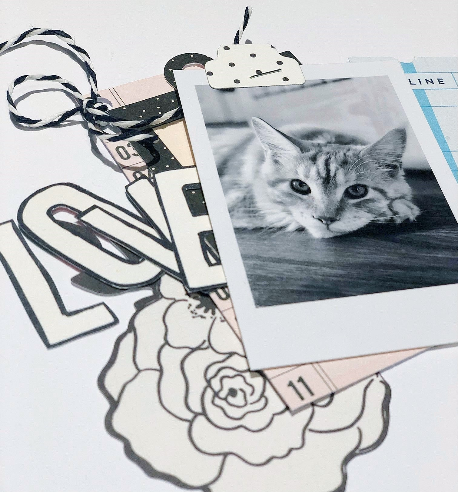 catty1.jpg