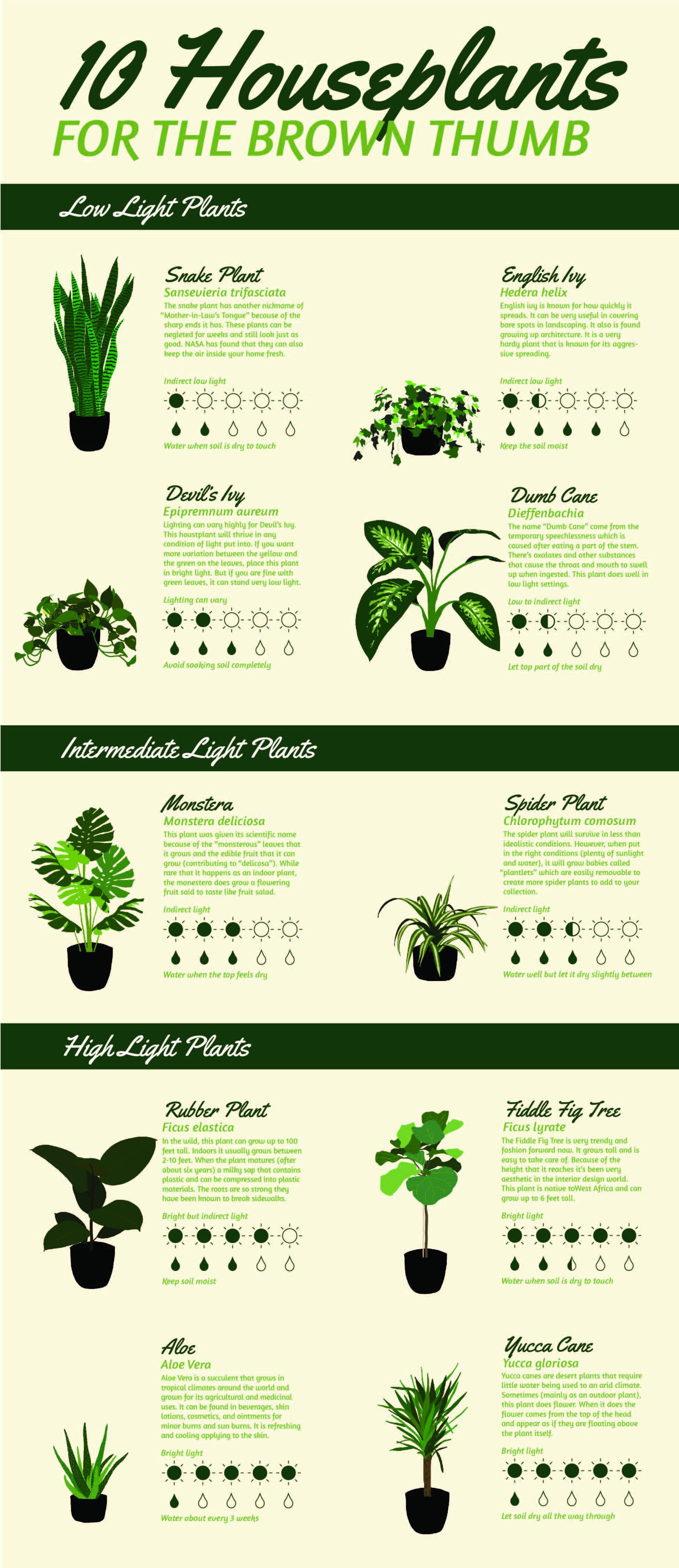 Houseplant Infographic-01.jpg