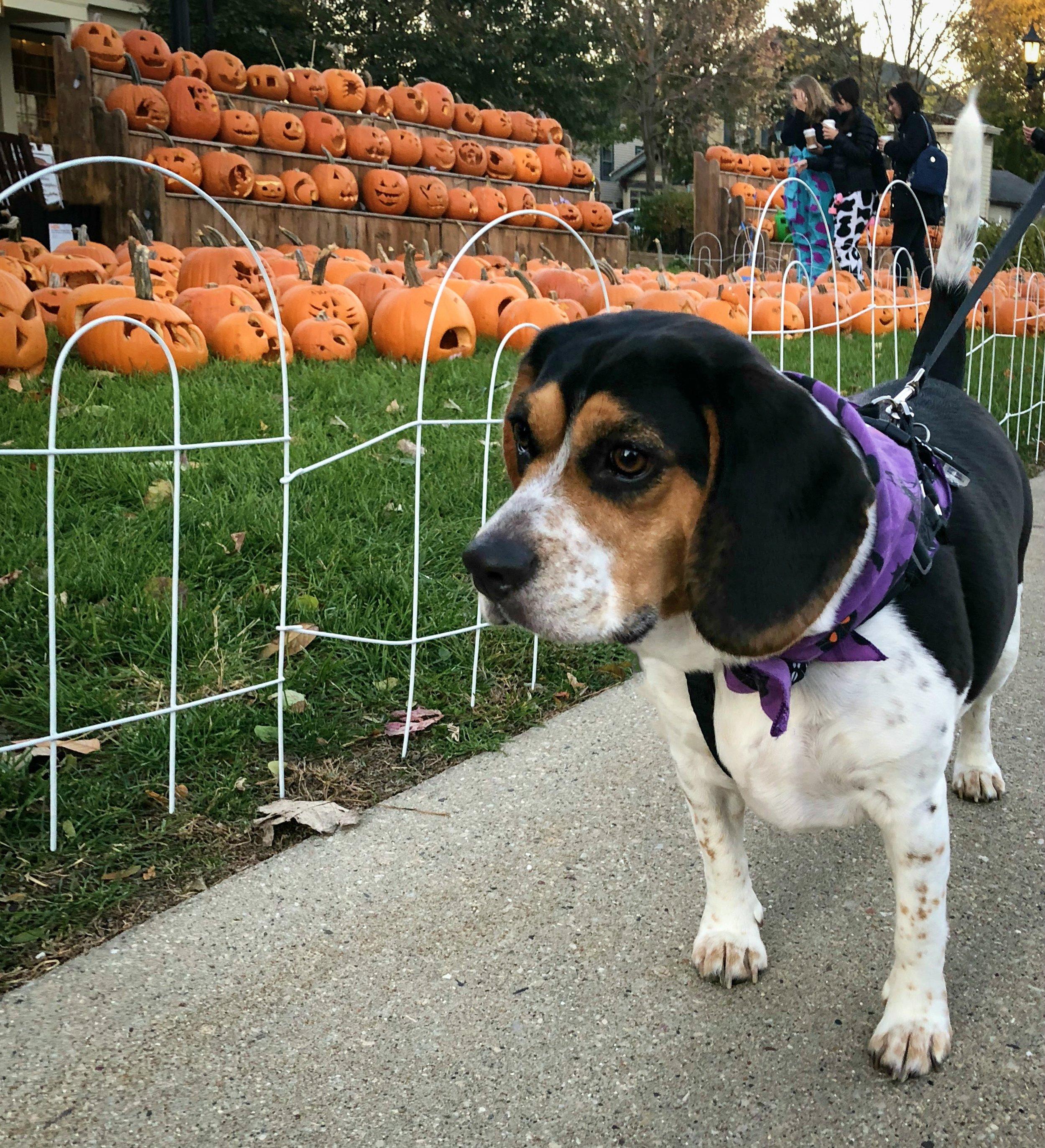 Piper + Pumpkins