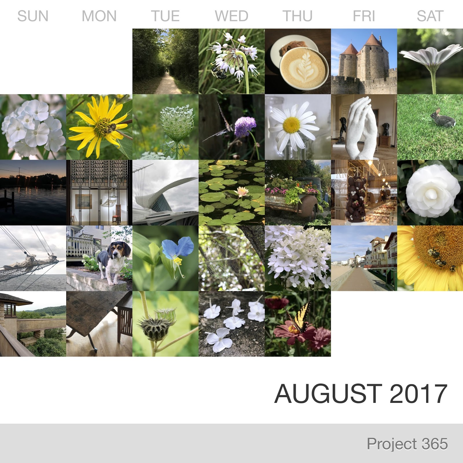 Project 365 _August-2017_Collage.jpg
