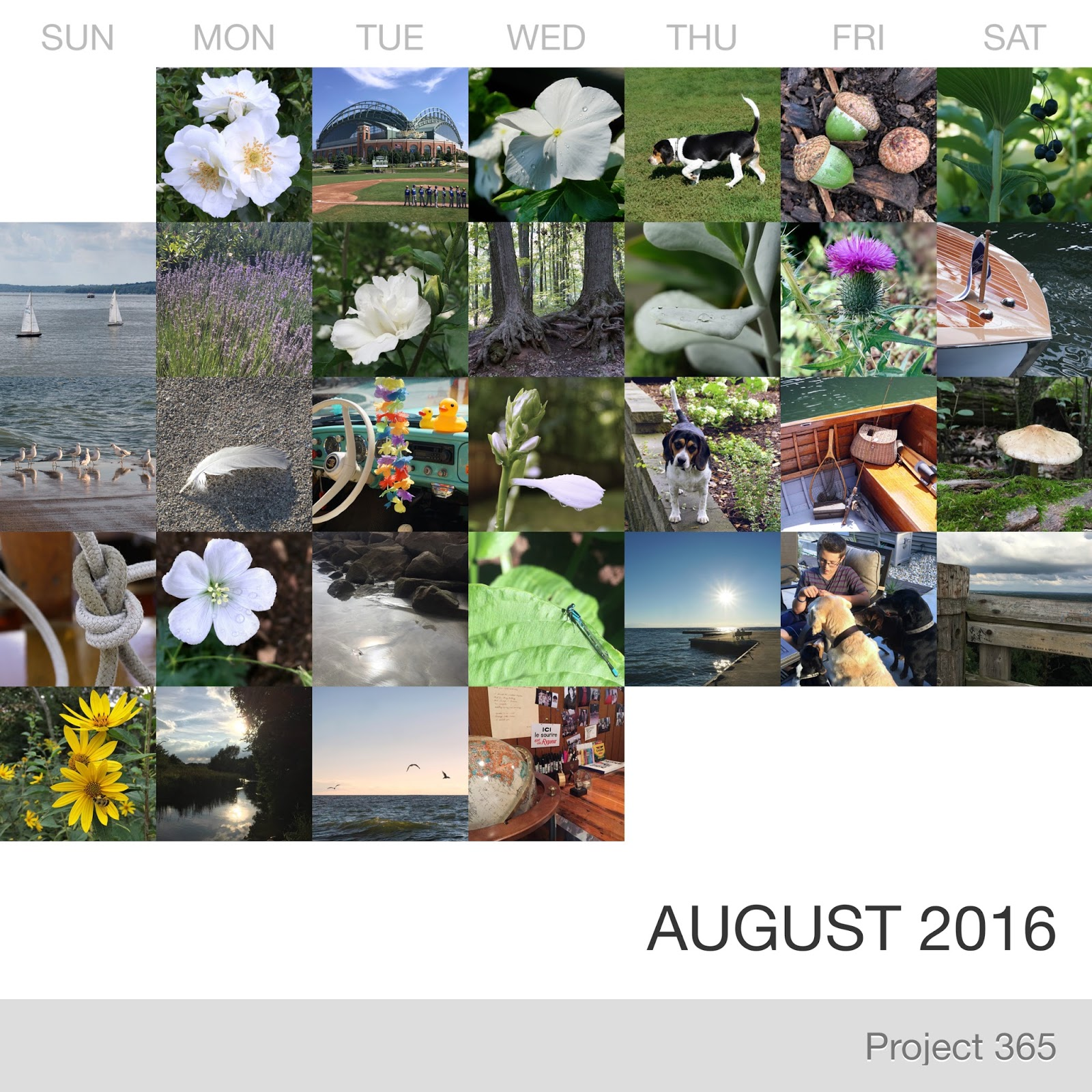 Project 365 _August-2016_Collage.jpg
