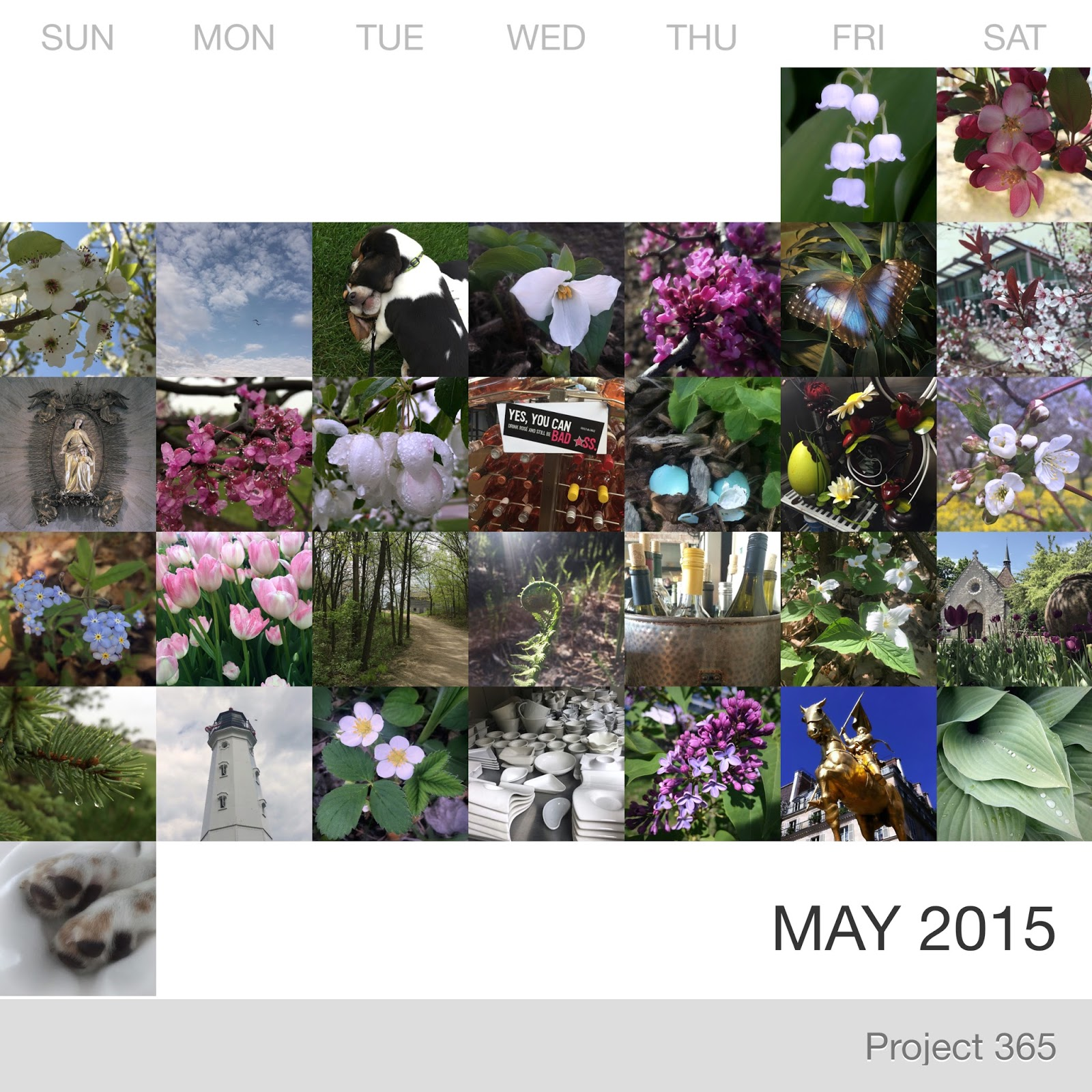 Project 365 _May-2015_Collage.jpg