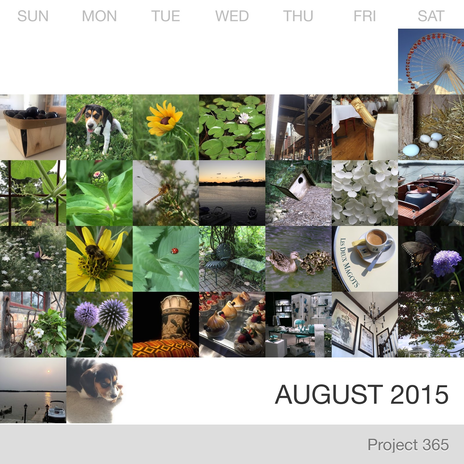 Project 365 _August-2015_Collage.jpg