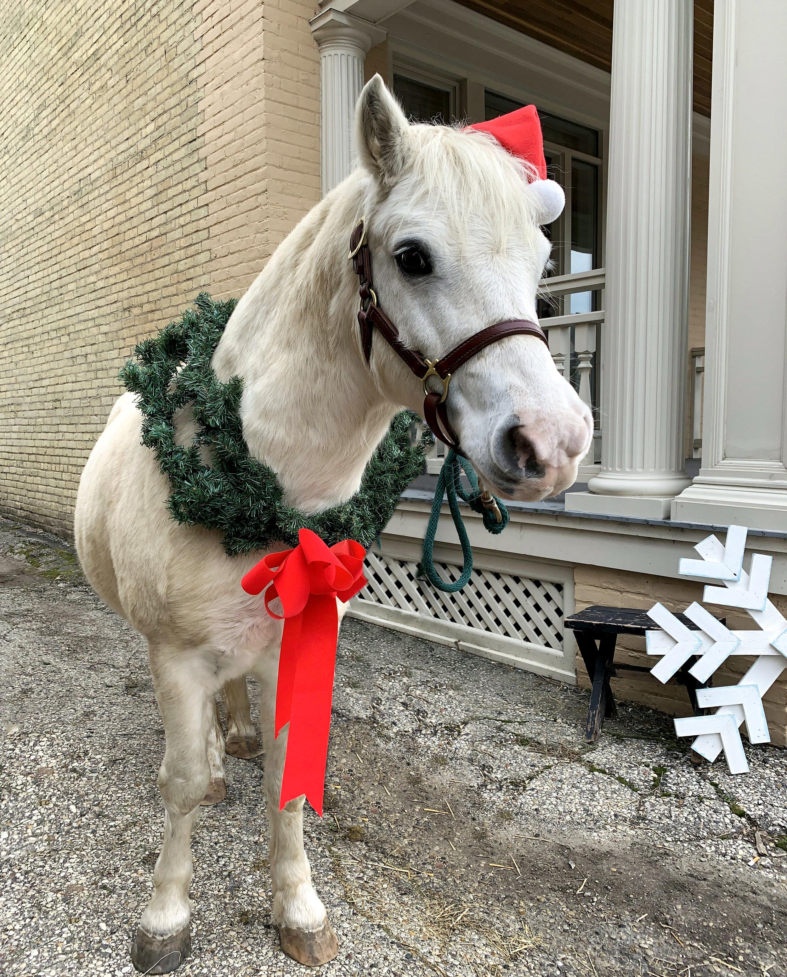 Christmas Pony 2