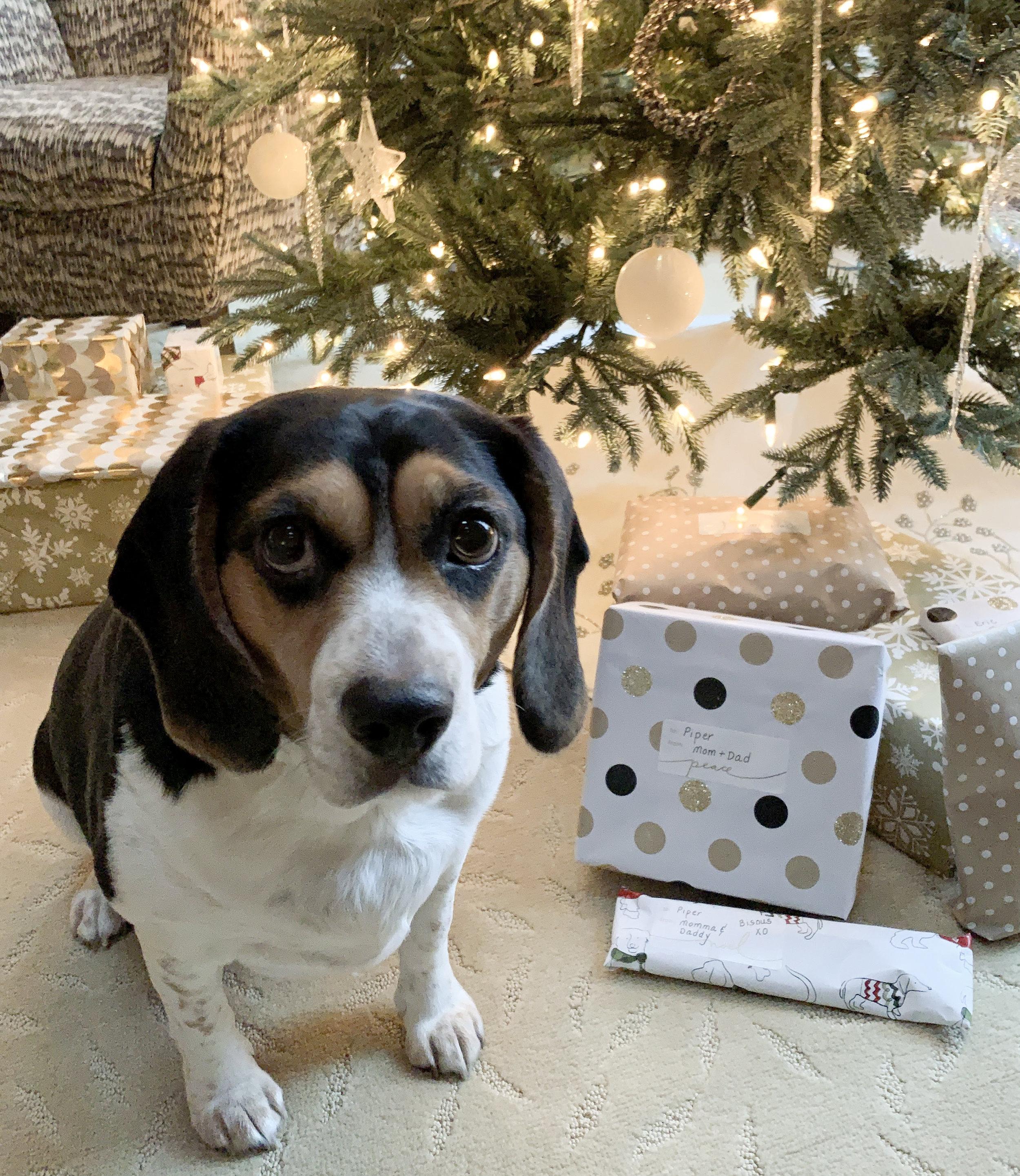 Piper - Christmas 2018