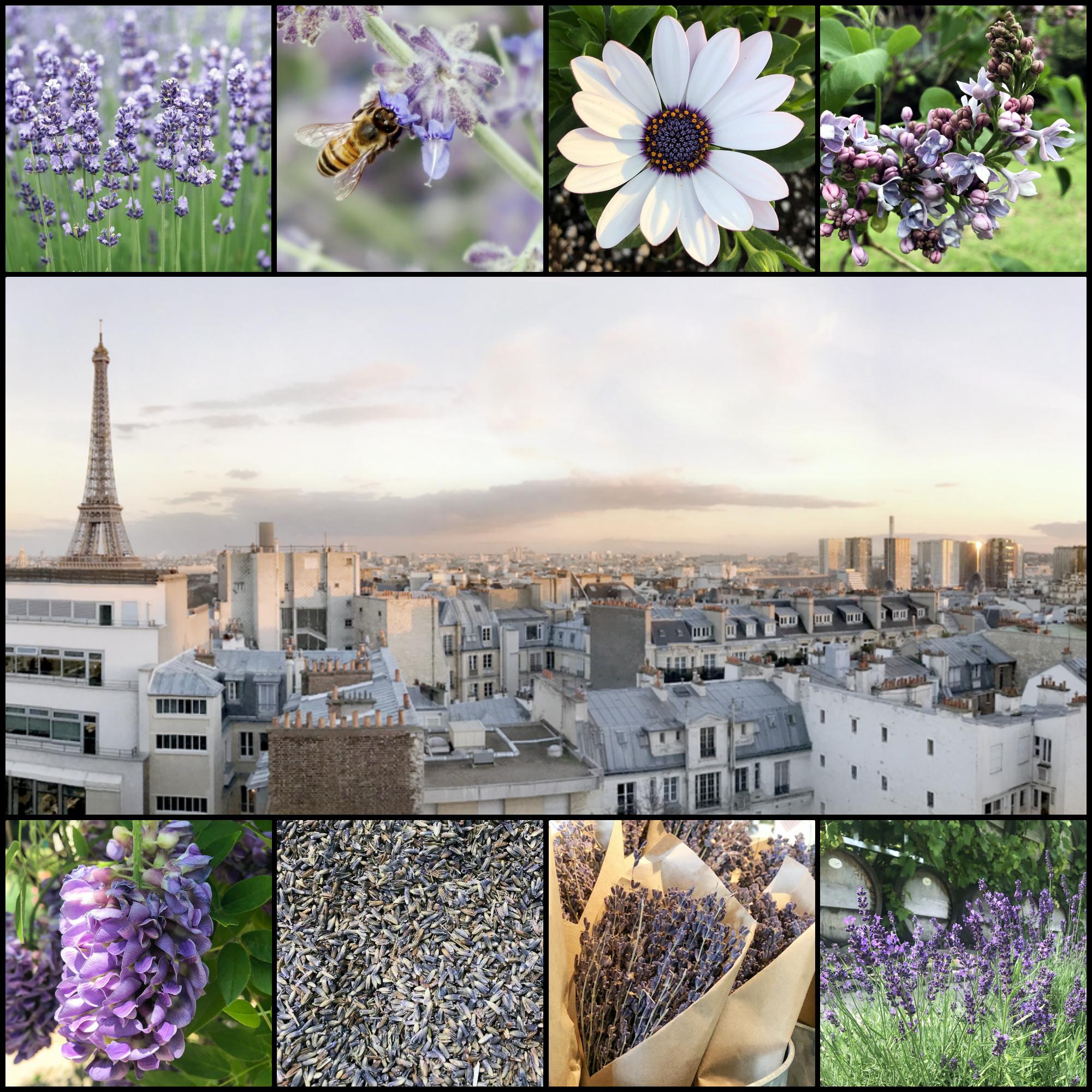 la vie en violet | purple