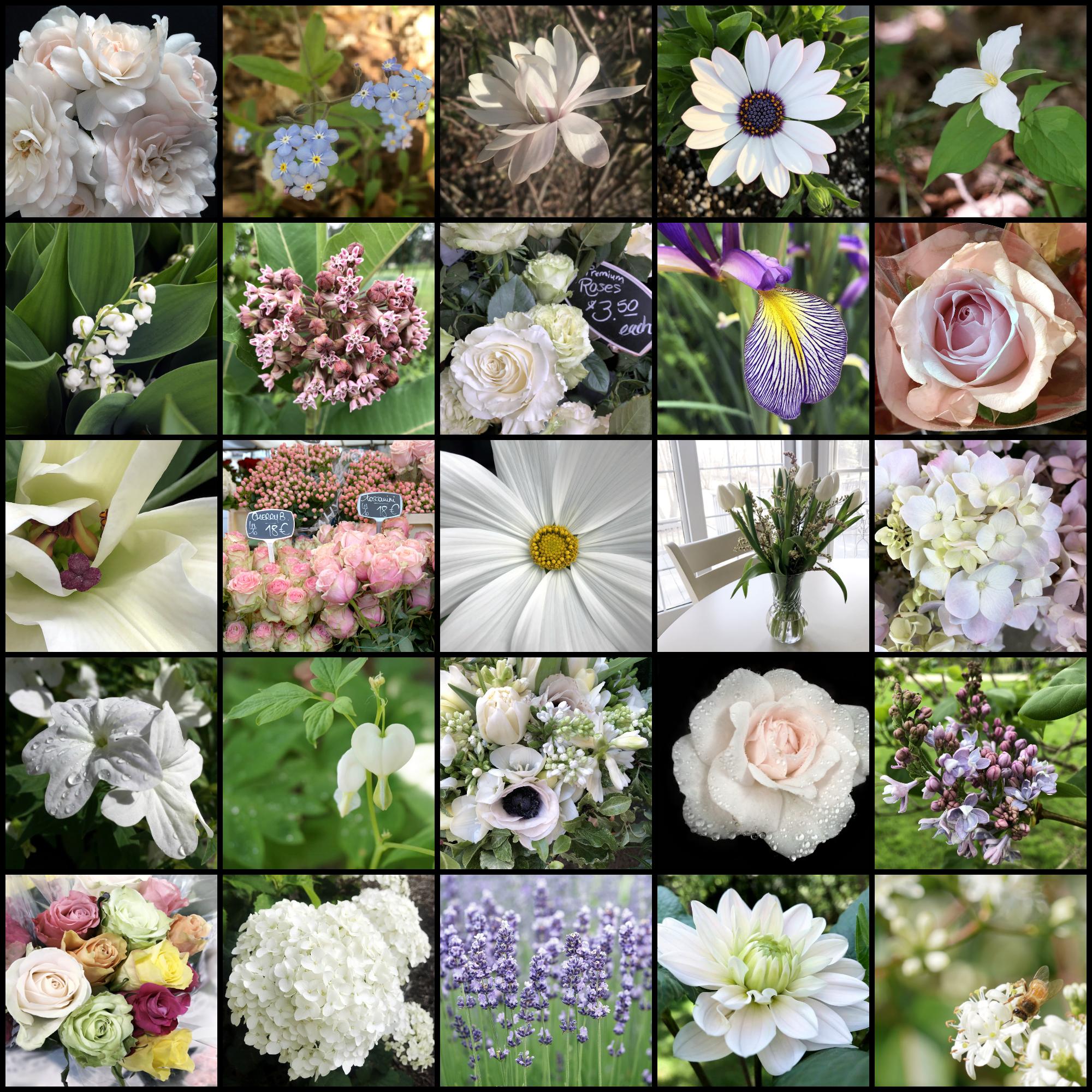 les fleurs | flowers