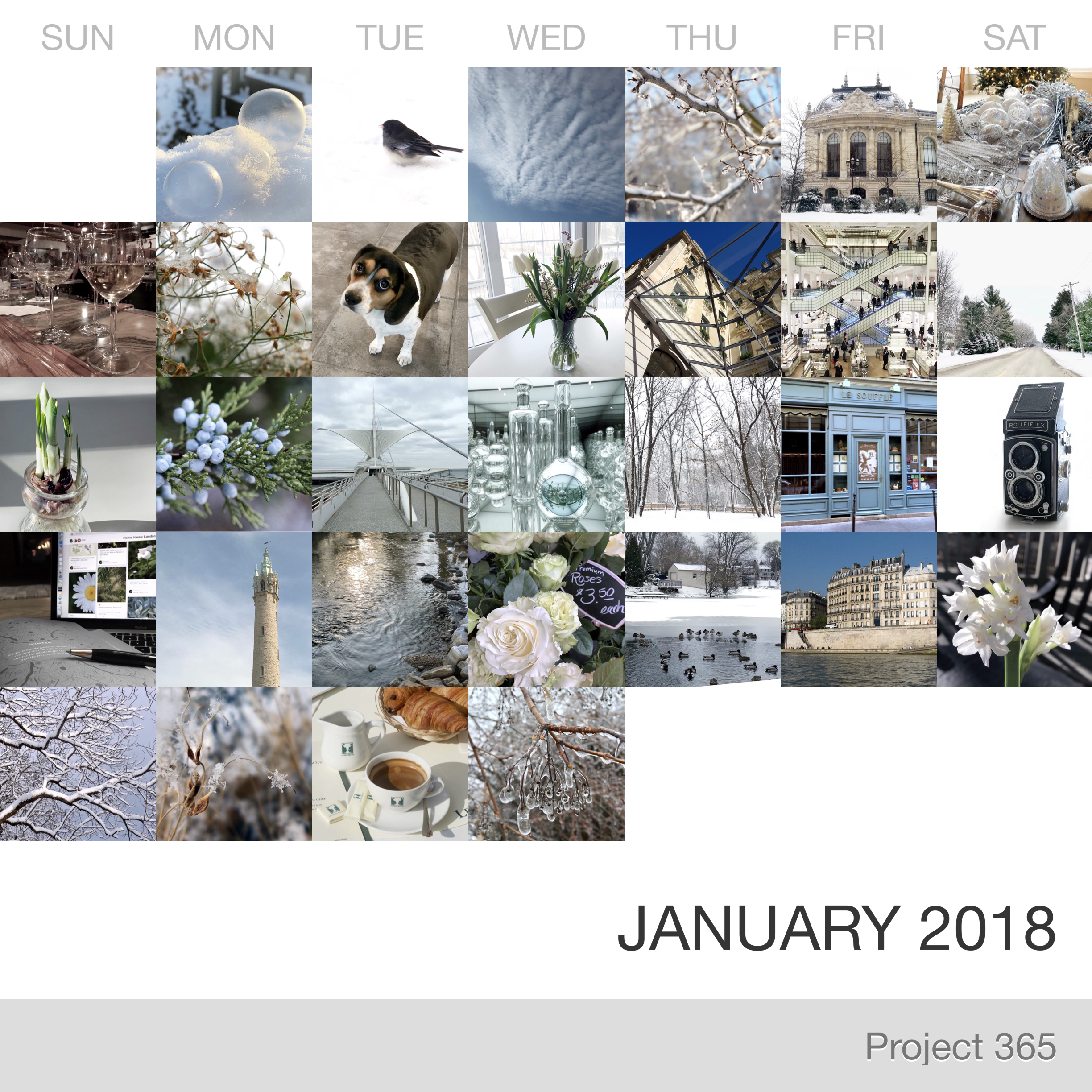 Project 365 _January-2018_Collage.jpg