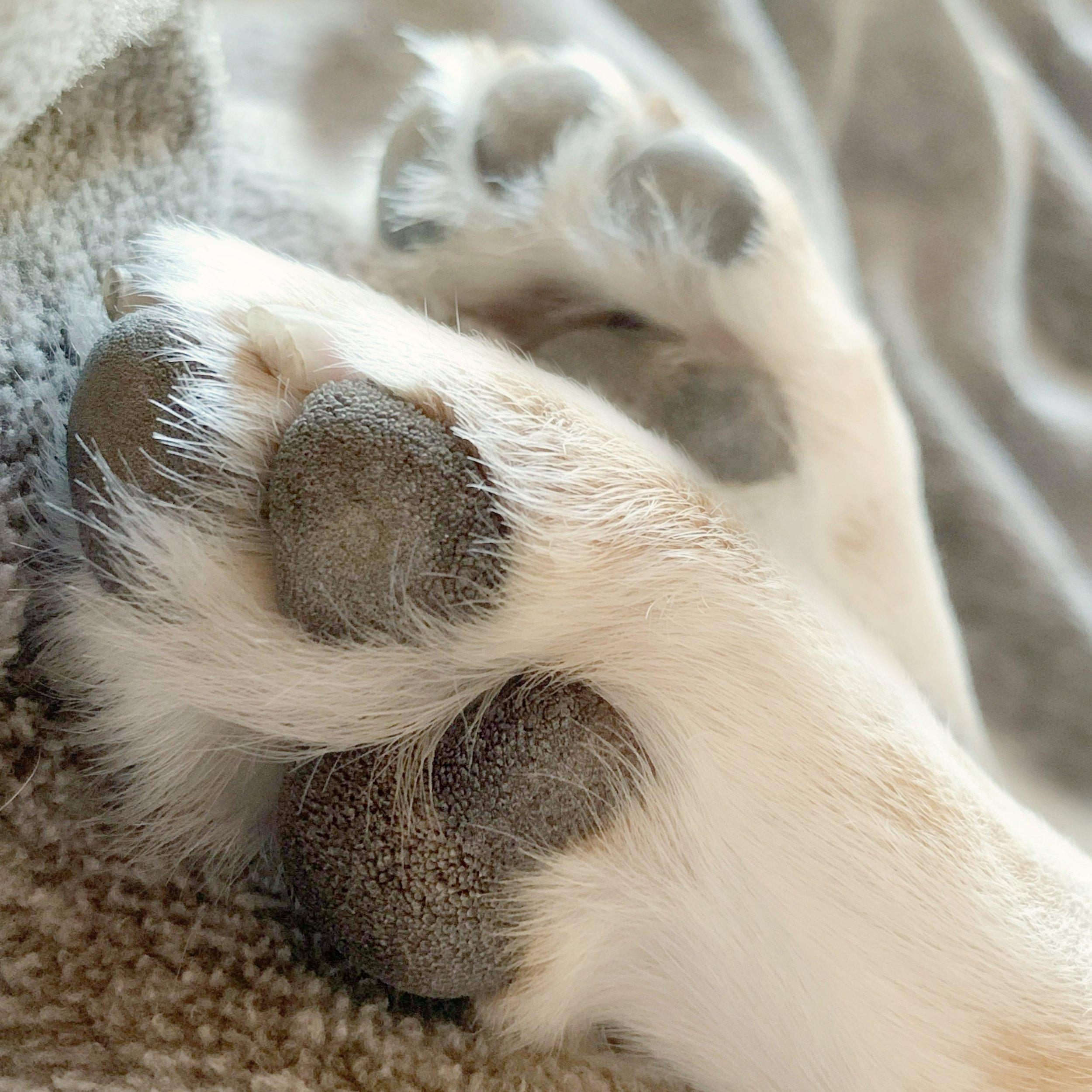 Tell a story that makes us feel warm inside. #2019dogwood53 #dogwood52 #dogwoodweek4
