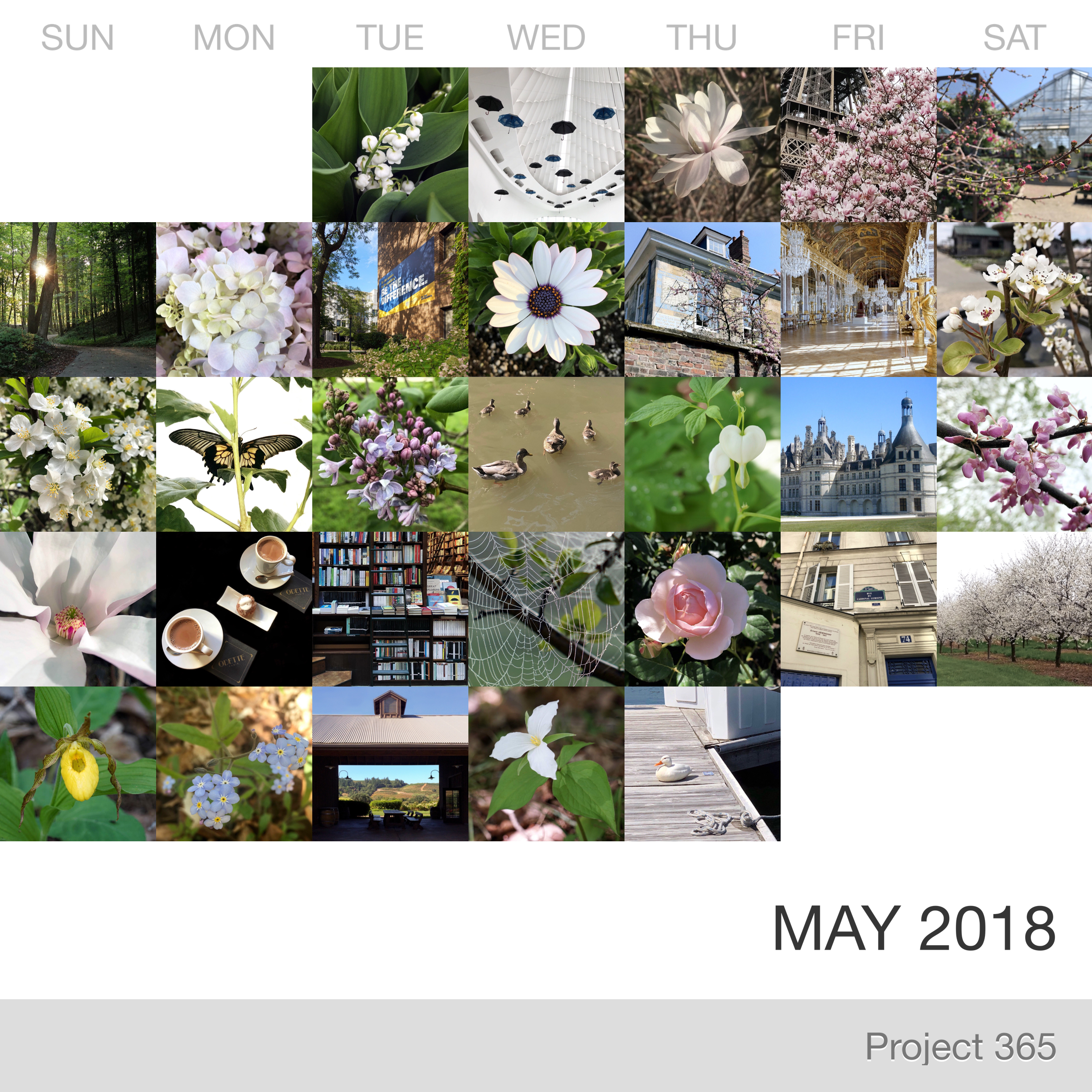 Project 365 _April-2019_Collage.jpg
