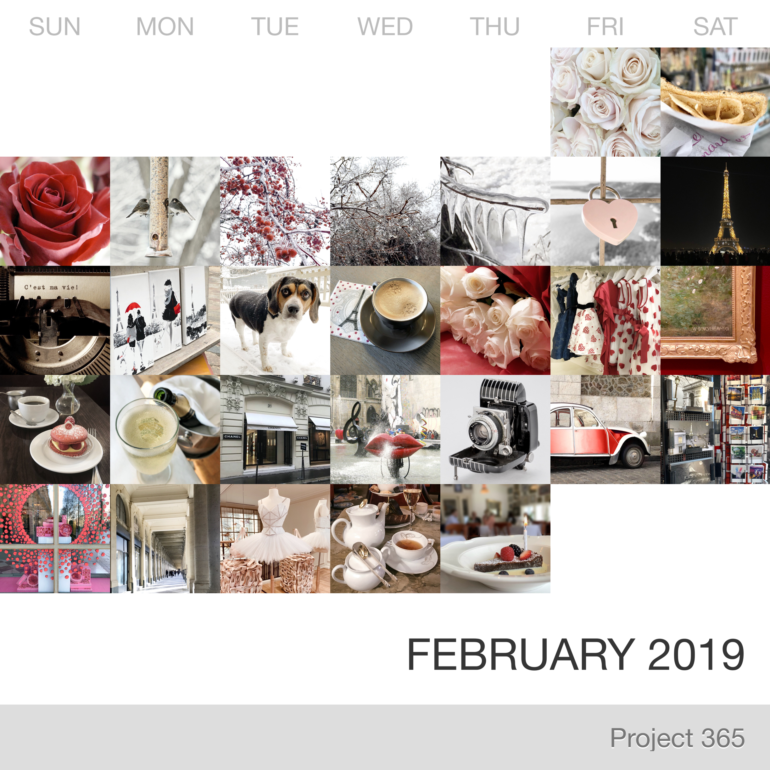 Project 365 _February-2019_Collage 2.jpg