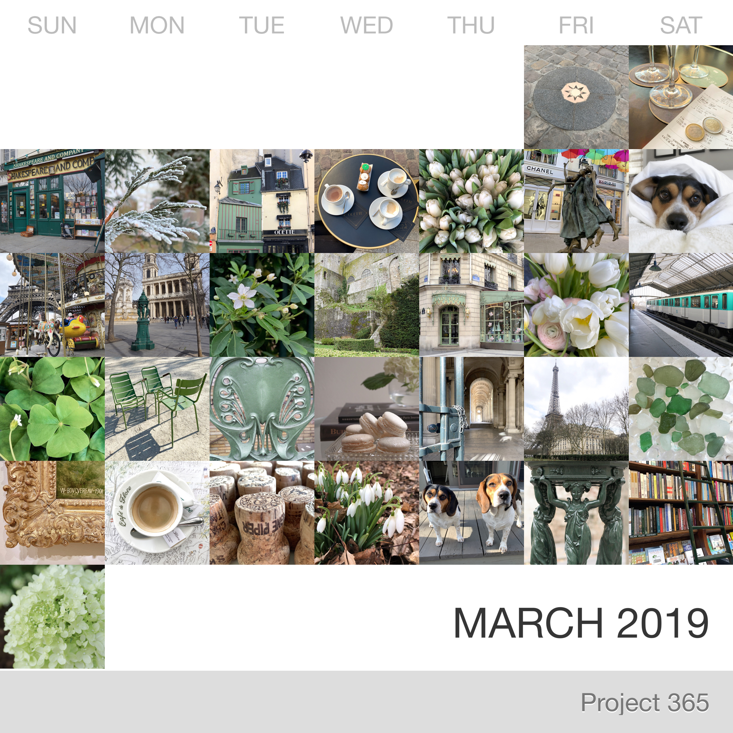 Project 365 _March-2019_Collage.jpg
