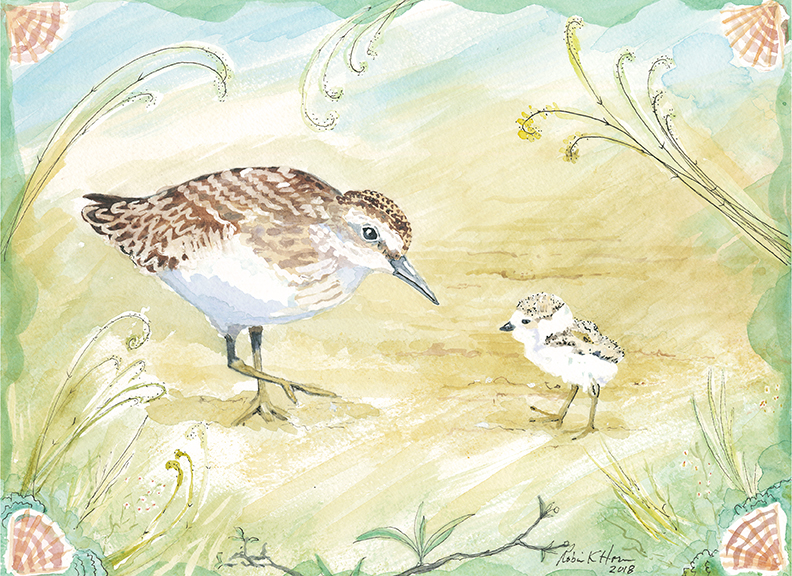 Sandpiper Mother and Chick