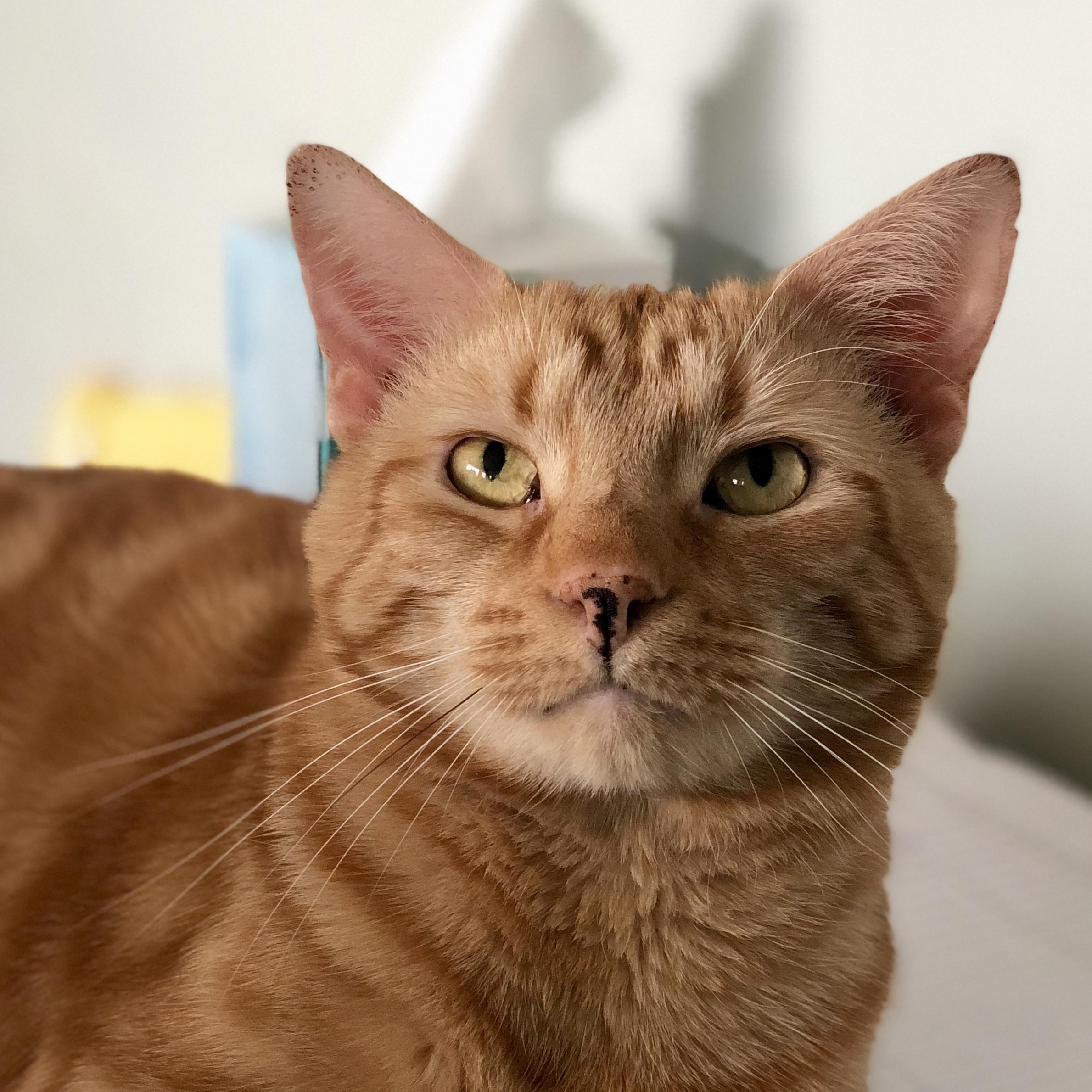 cat at south bay veterinary clinic