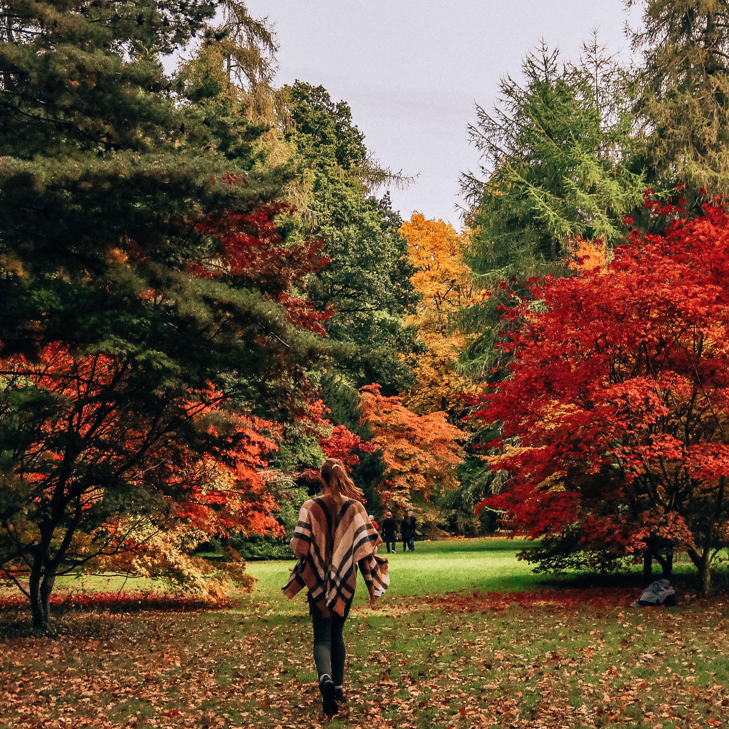 Westonbirt Arboretum: photo guide -