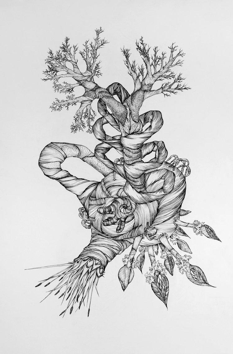 Maggie Nowinski,  Untitled Specimen , 2017. Ink on paper.