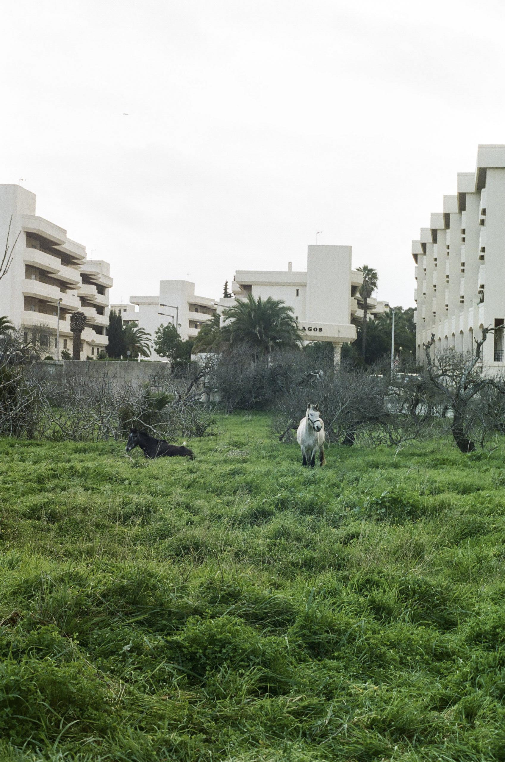 Nate Lerner, Lagos, Portugal (2017)