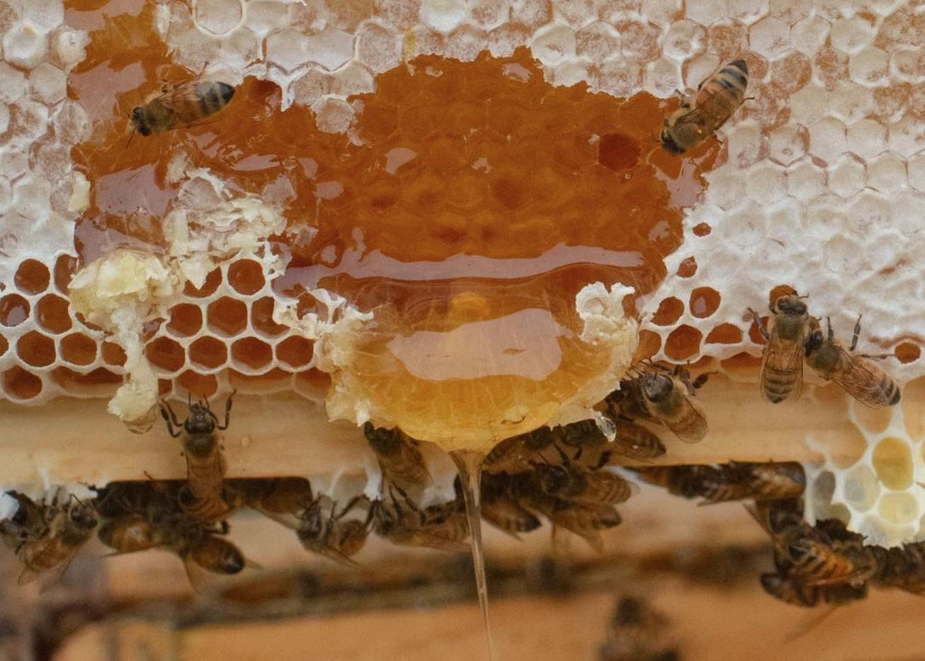 Bees working at Vandehoney.