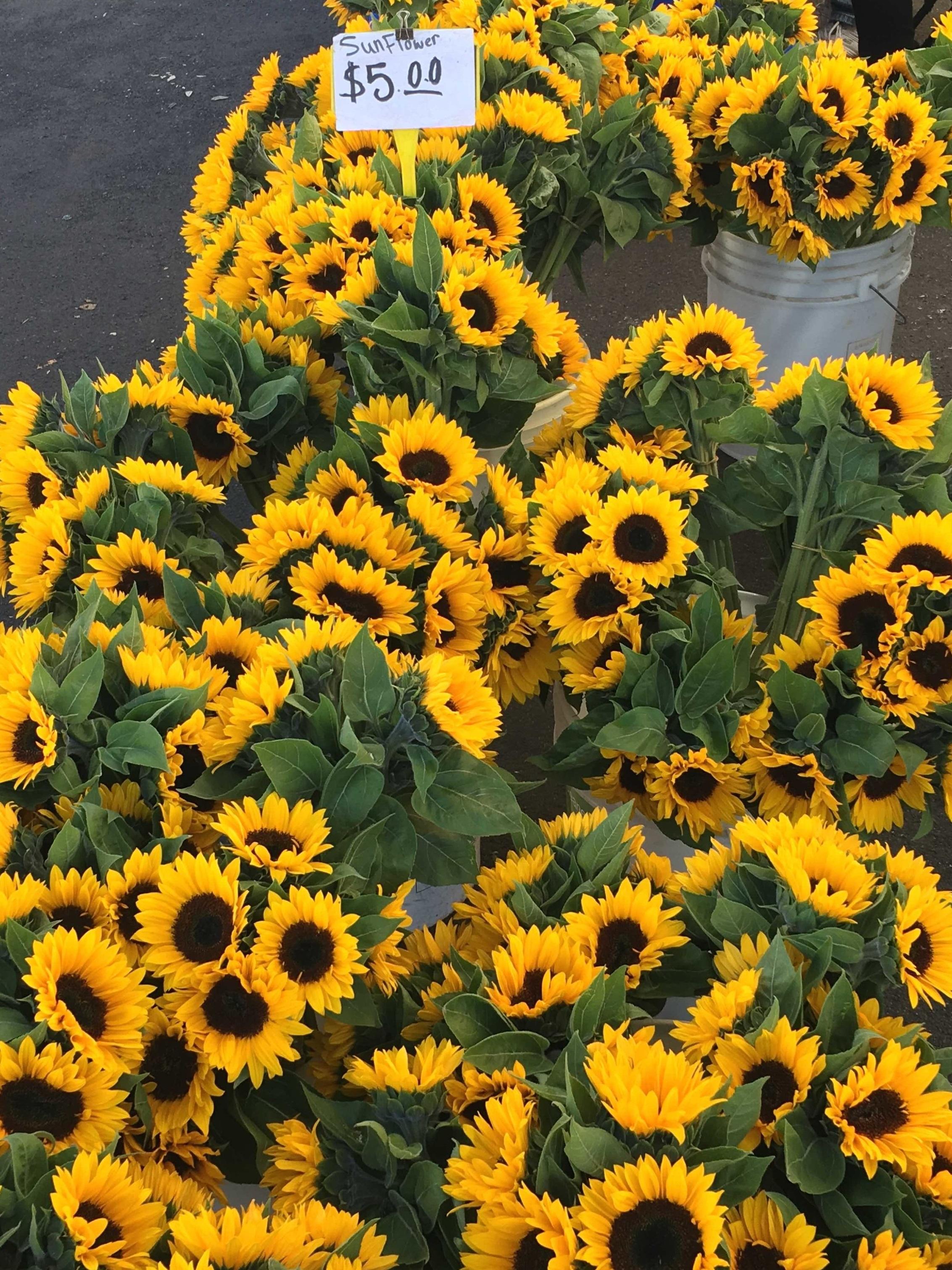 ThisOutsideLife.com-sunflowers.jpg