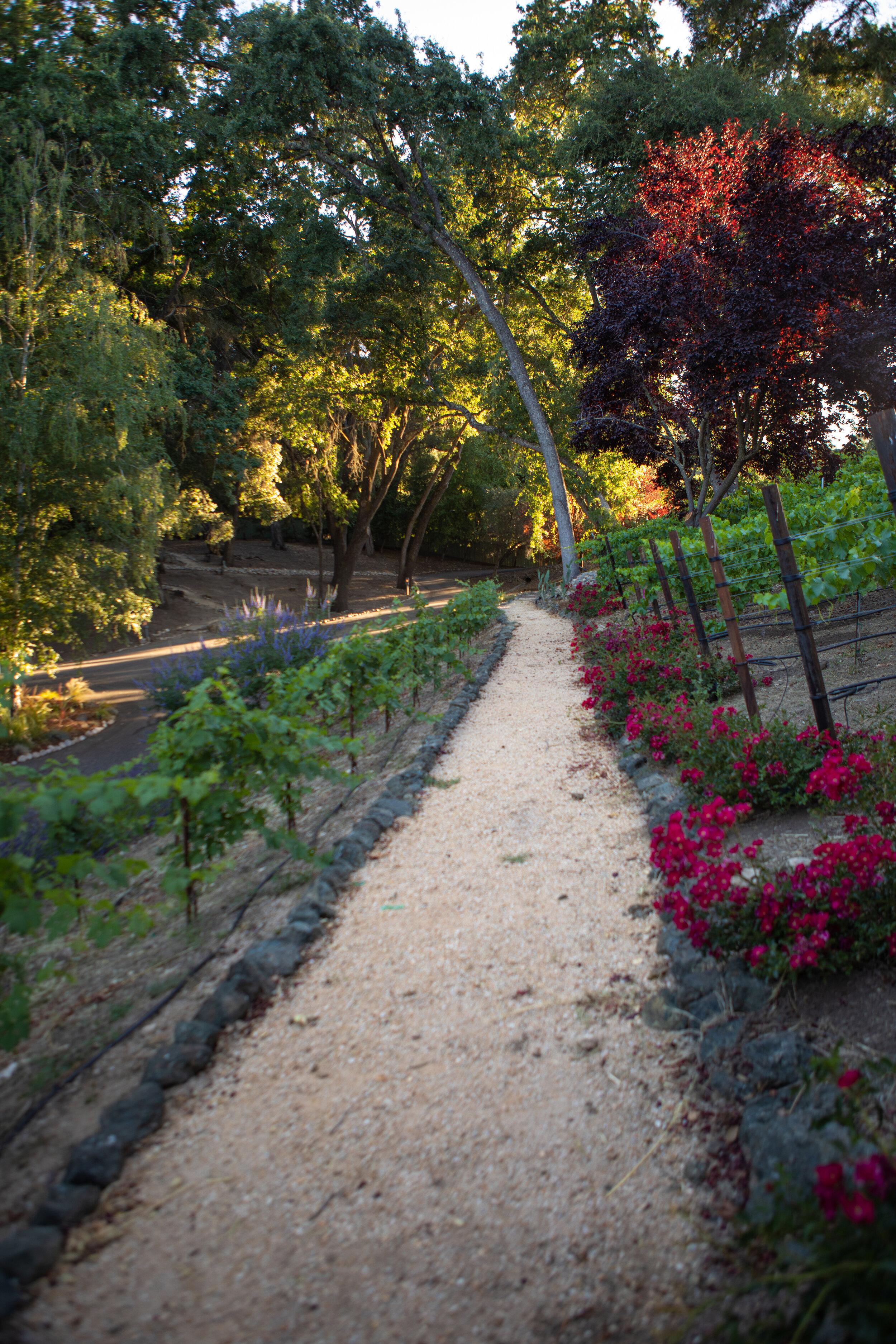 Vineyard path.jpg