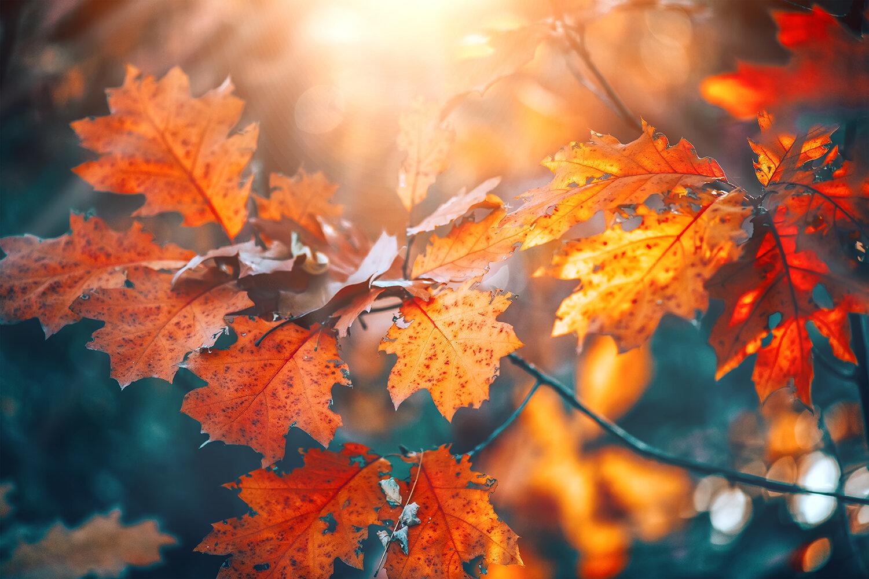 red-fall-leaves.jpg
