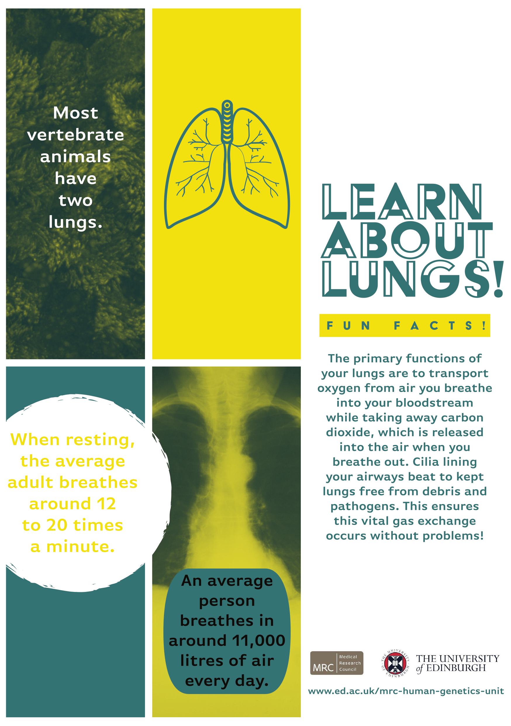 Lung handout front final.png