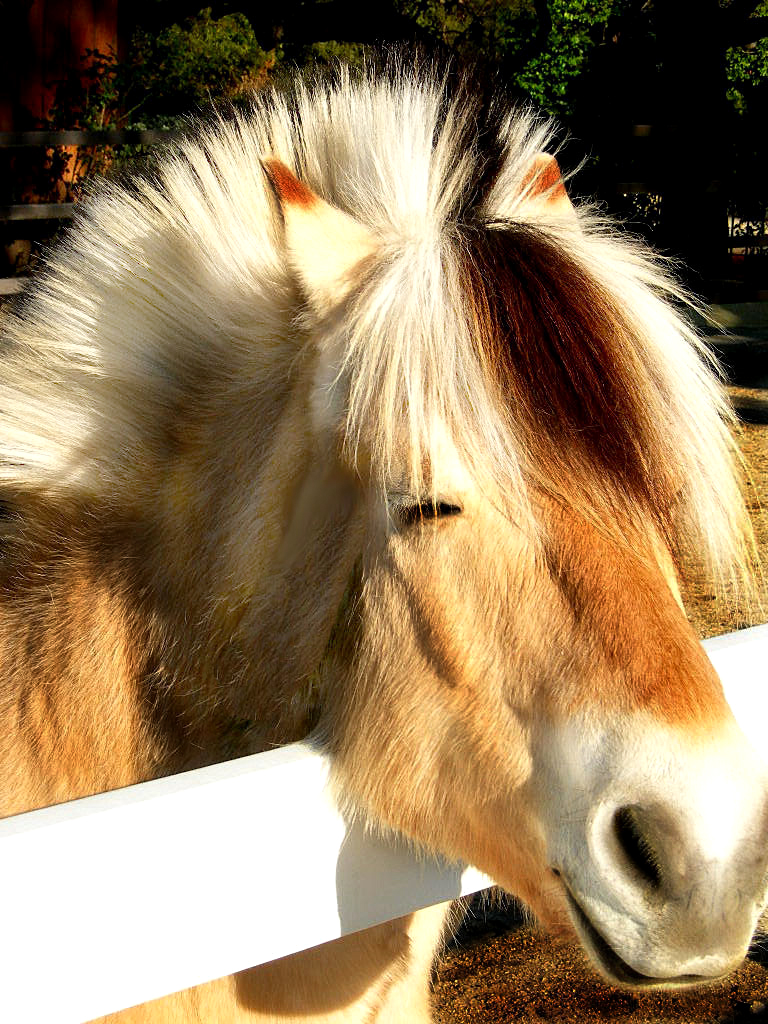 The Petrie's Danish Horse            .jpg