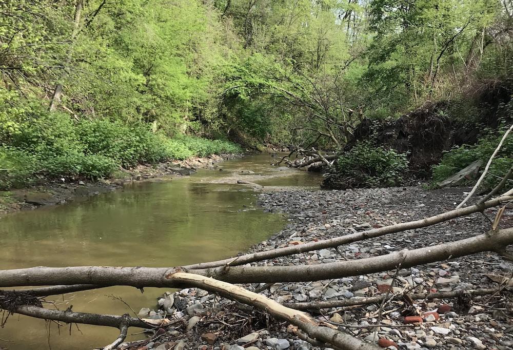 Saw Mill Run, Seldom Seen Greenway. Image: Becca Halter