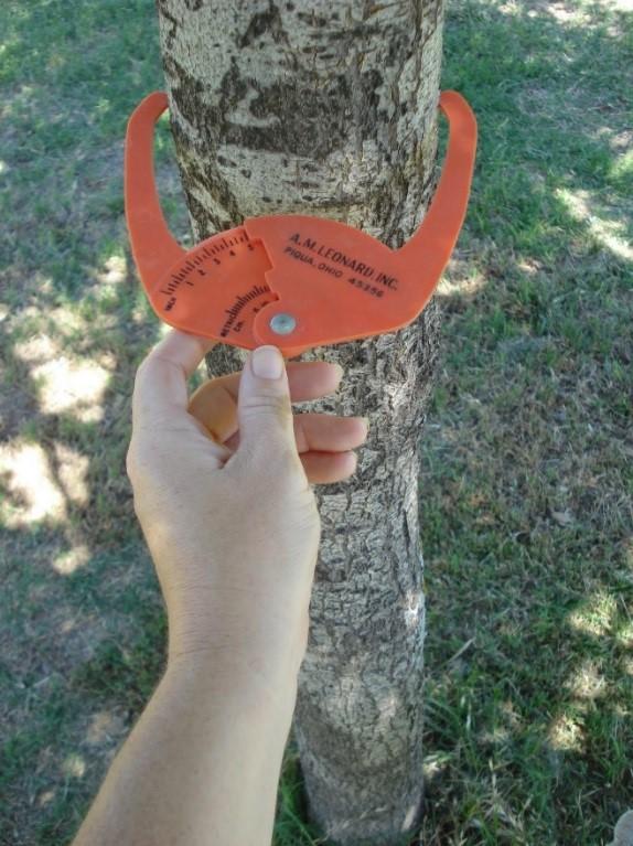 Image 2 - Tree Caliper Inches.jpg