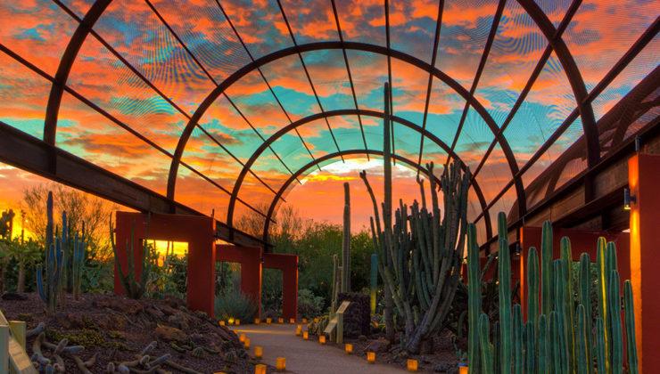 Phoenix-DesertBotanicalGarden-TravelandLeisure-740x420.jpg