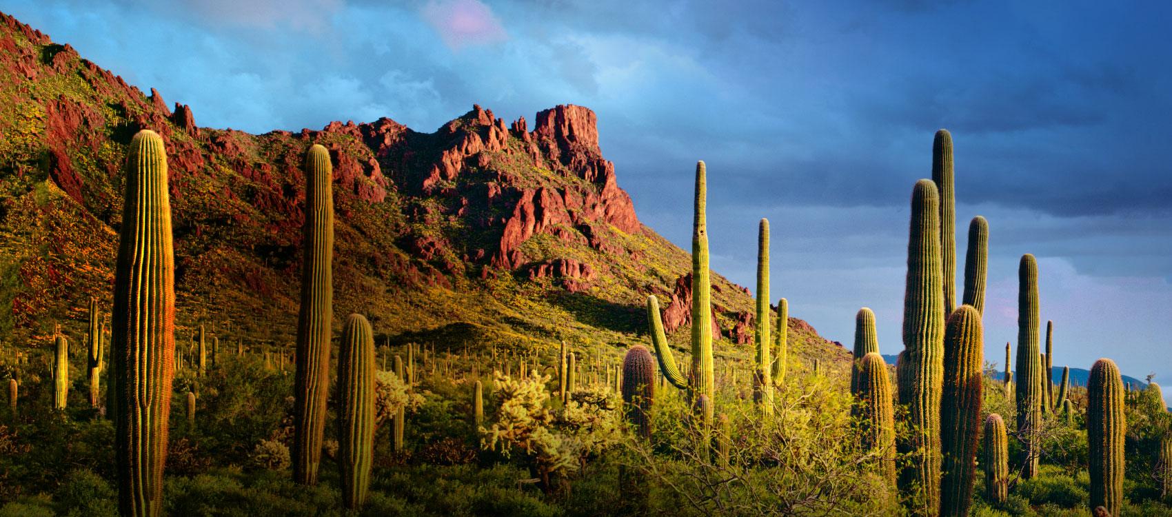 Phoenix-Kimton.jpg