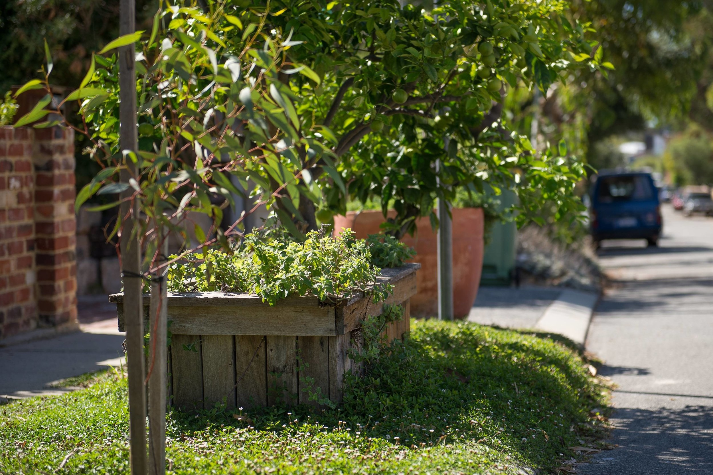Fremantle provides resources to residents to establish verge gardens
