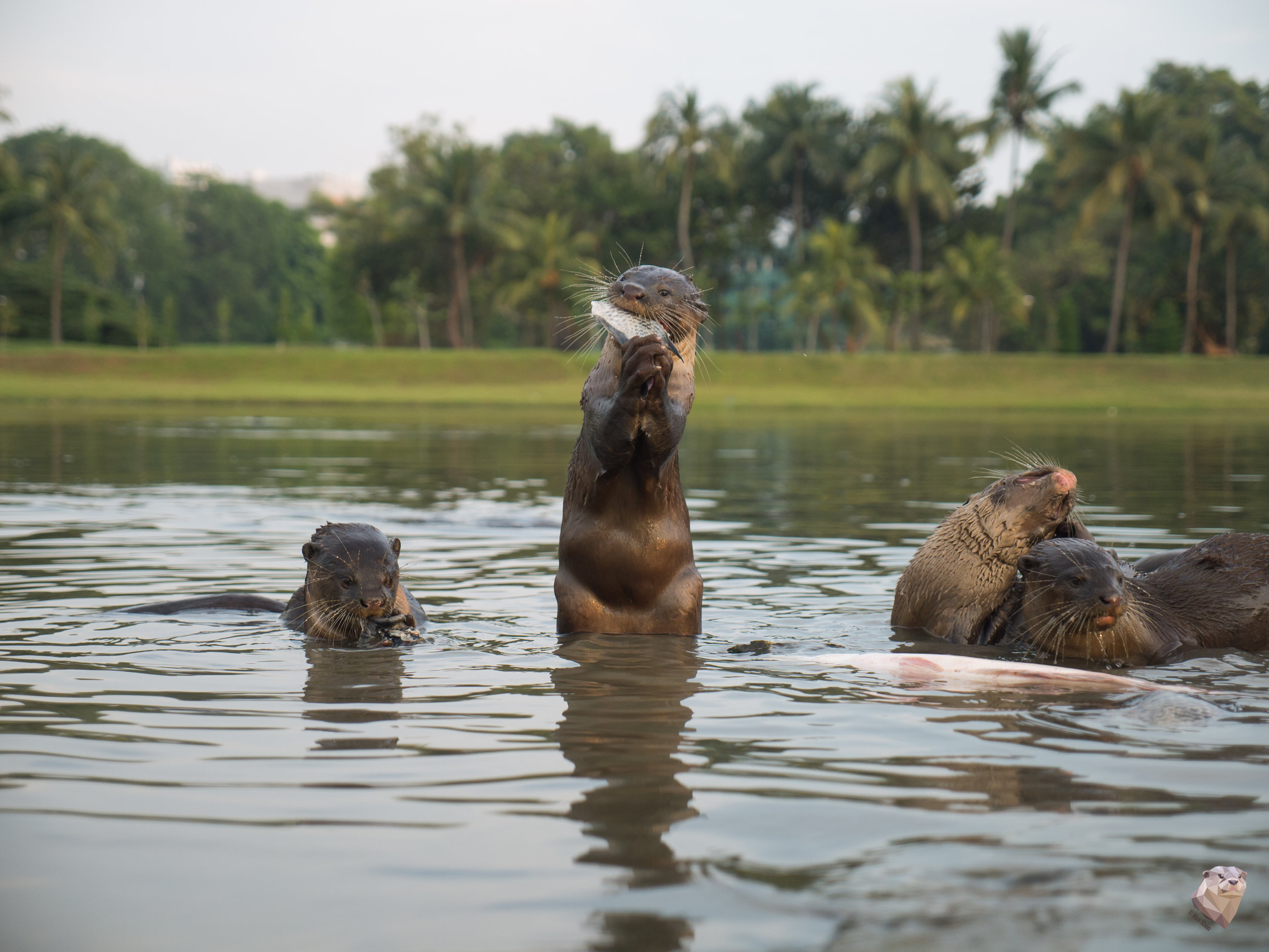 Feeding time for the Otters! Photo by Max Khoo