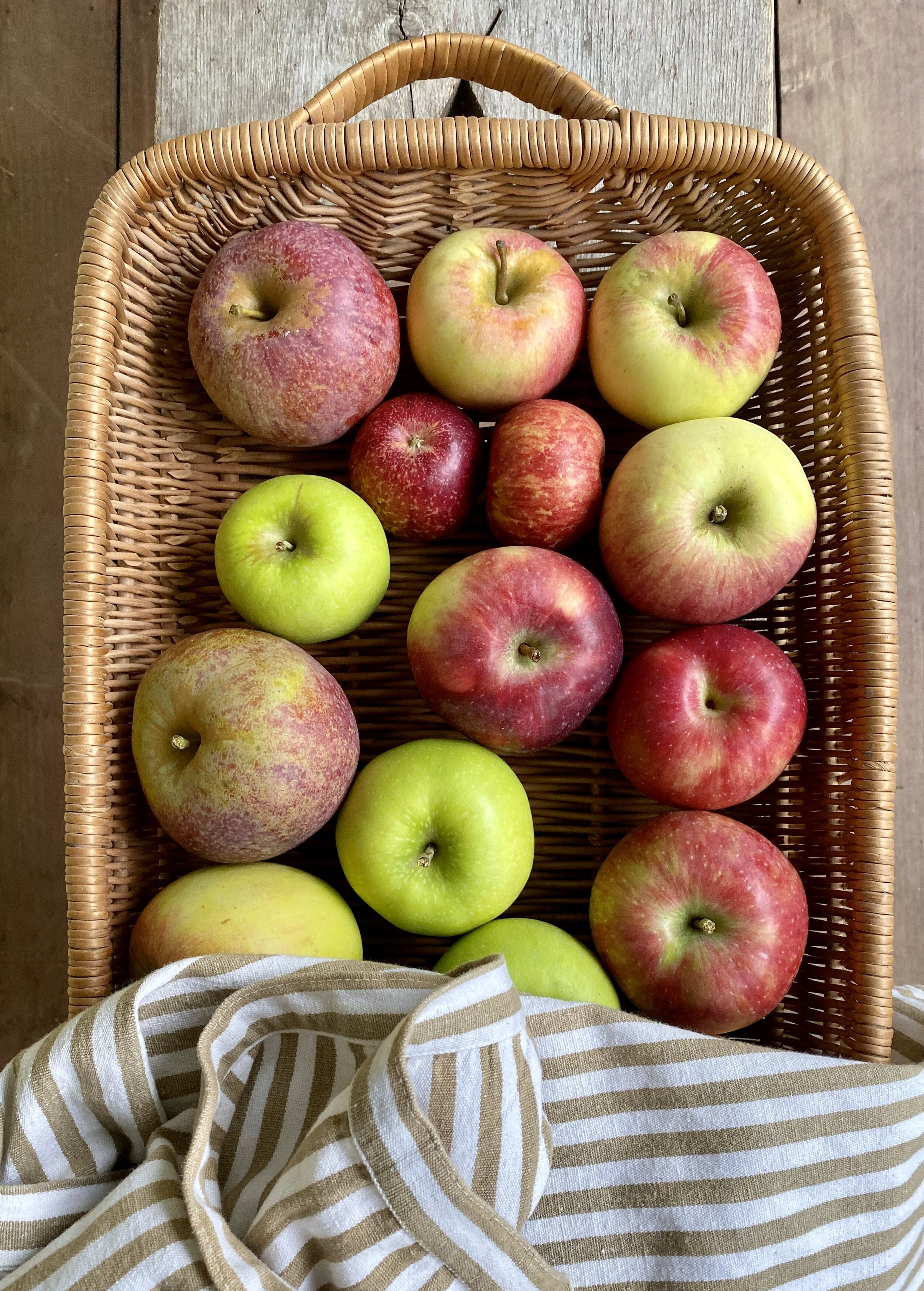 Shelburne Farm heirloom apple selection is very exciting. Shown above: Blue Pearmain, Firecrackers, Kidd's Orange Red, Grimes Golden, Bonkers, and Chenago Strawberry.