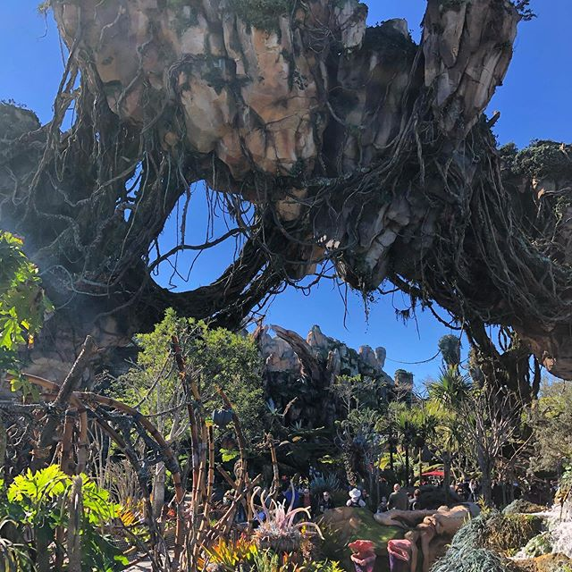 💥Pretty amazing addition to Animal Kingdom at DisneyWorld. Our family loved it and agreed that Animal Kingdom is our favorite Disney park💥#disneyworld #disney #animalkingdom #pandora #avatar #themepark #themeparks #orlando #rollercoaster #disneyland #familytravel #travel #travelusa #florida #follow #magic #traveler #travelers #wanderlust #redpinit #magickingdom #happiestplaceonearth #happy #vacation #traveladdict #sheisnotlost