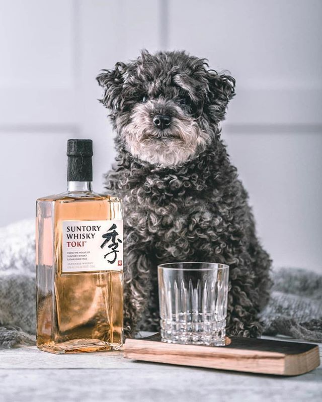 Pretty much the perfect photo?  Suntory Whiskey✔️ Cute dog✔️ Thanks, @suntorywhisky_hibiki !! // #suntorywhisky #japanesewhiskey #humpday #wednesdaymotivation #drinkphotography #bestappever #drinkstagram #puppylove #terrier