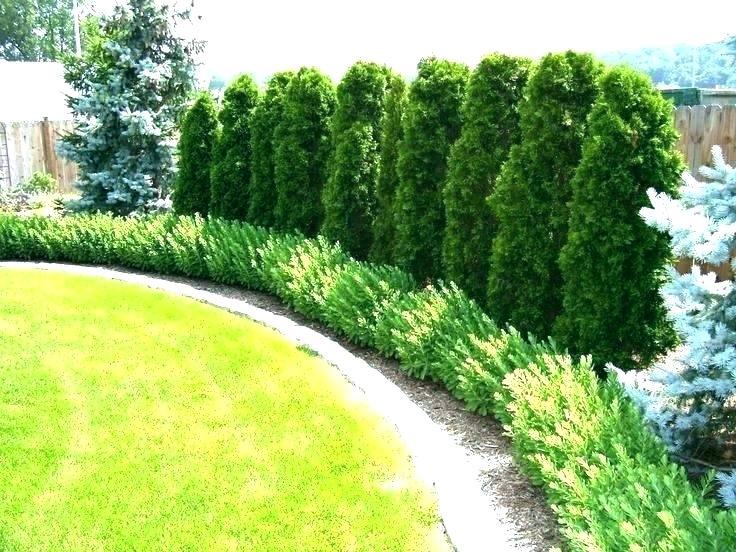 Papis lawn Services - Landscape - Landscaping - Yulee FL - Fernandina FL - Jacksonville FL (7).jpg