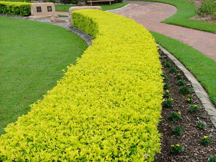 Papis lawn Services - Landscape - Landscaping - Yulee FL - Fernandina FL - Jacksonville FL (11).jpg
