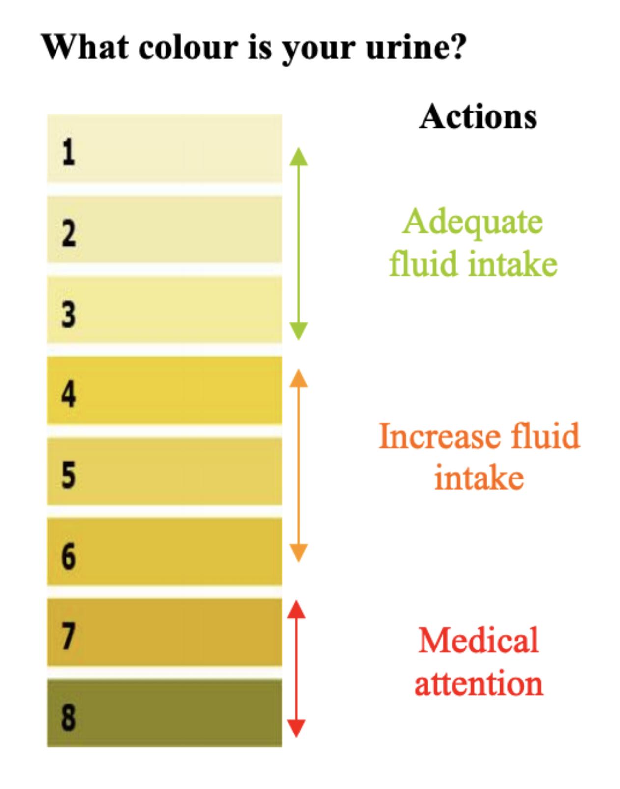 urine chart.png
