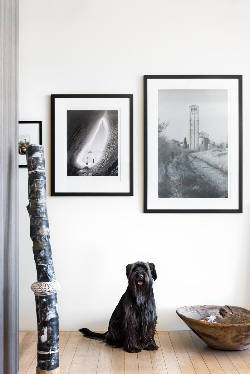 Resident Dog Blog-Nicole England-MrGambler9.jpg
