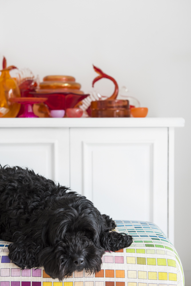 Resident Dog Blog-Nicole England-Noodle1.jpg