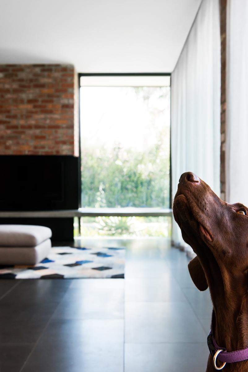 Resident Dog Blog-Nicole England-Bear1.jpg