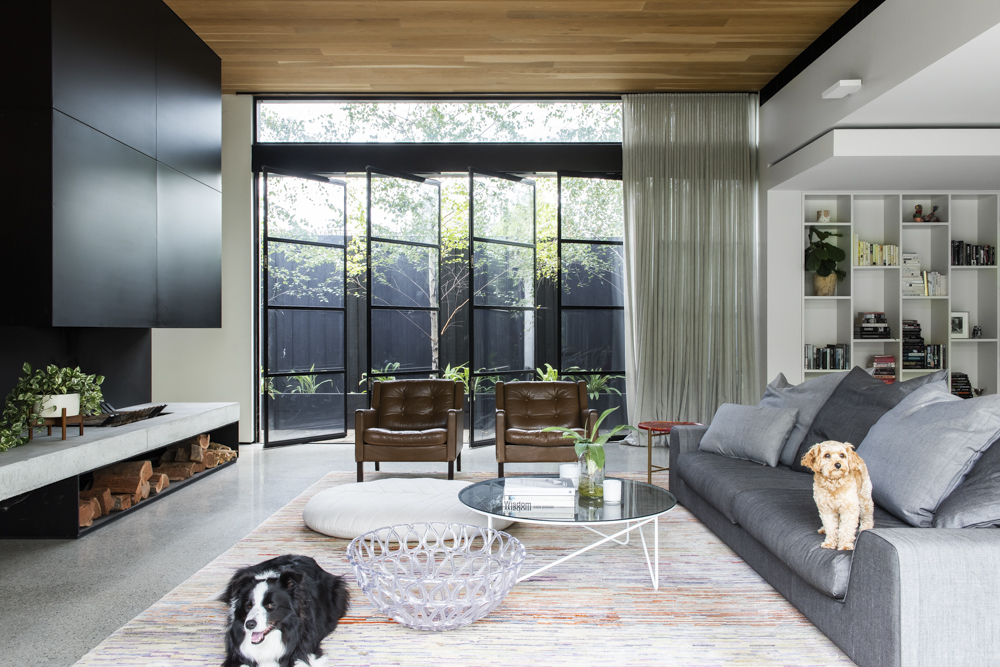 Resident Dog-Nicole England Blog-BooNoodle_DSC3588.jpg
