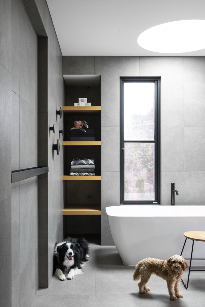Resident Dog-Nicole England Blog-BooNoodle_DSC3367.jpg
