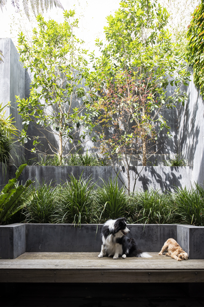 Resident Dog-Nicole England Blog-BooNoodle_DSC3676.jpg
