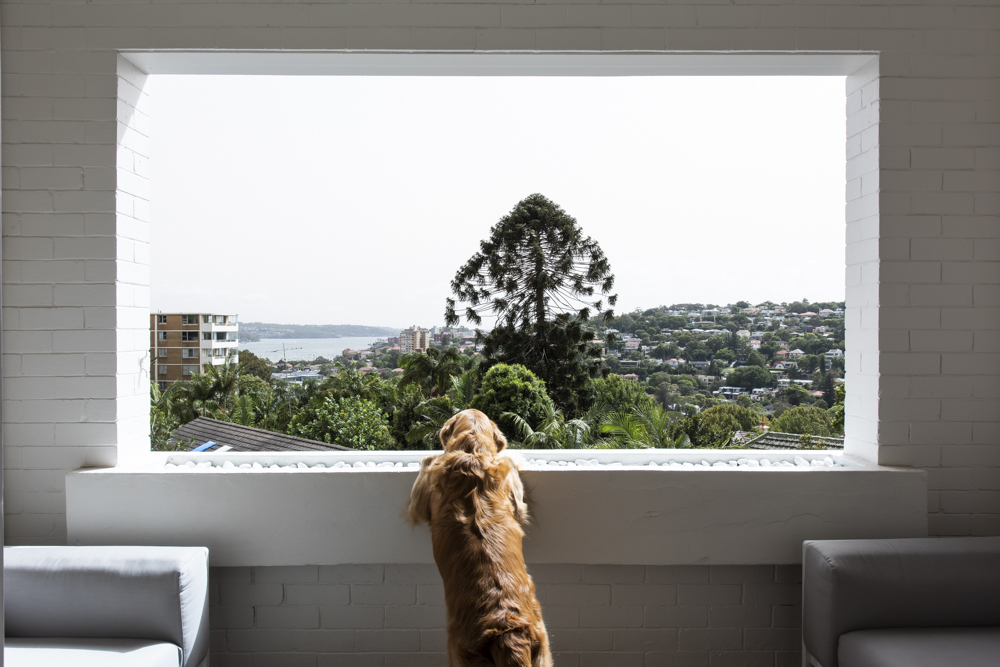 Resident Dog Blog-Nicole England-Humphrey3986.jpg