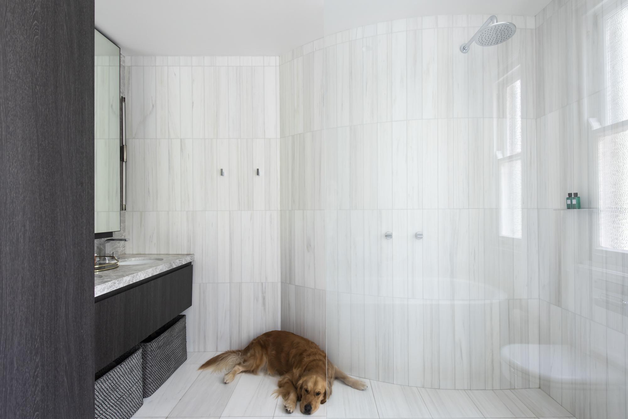 Resident Dog Blog-Nicole England-Humphrey4096.jpg