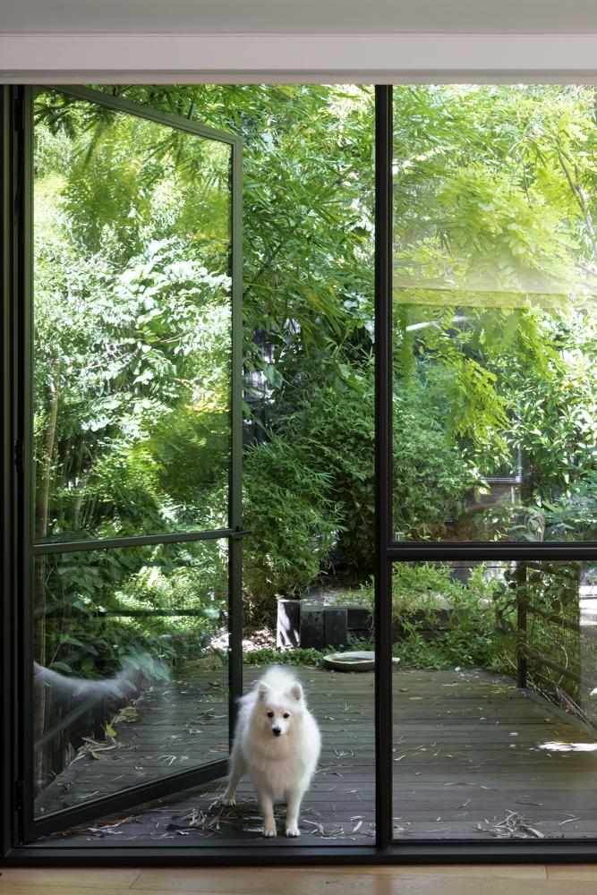Resident Dog Blog-Nicole England-Luna-Valentine5790.jpg