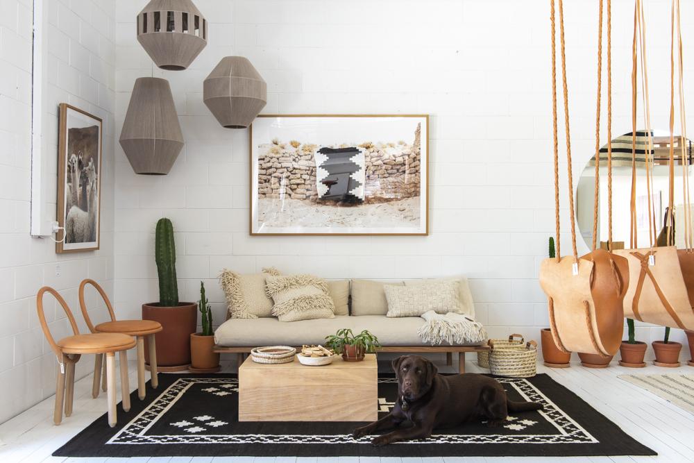 Resident Dog Blog-Nicole England-Poncho4856.jpg
